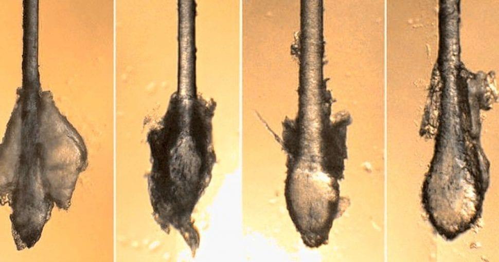 vlasový korienok po mesiacoch čistenia tonikom Rapuncell